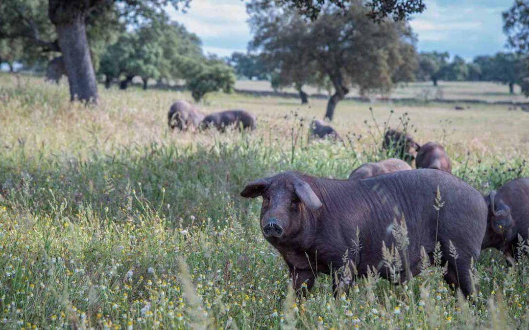 ¿Sabes qué animales hay en Peligro de Extinción en España?