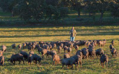 ¿Por qué elegí ser ganadero de cerdo Ibérico 100% de bellota?
