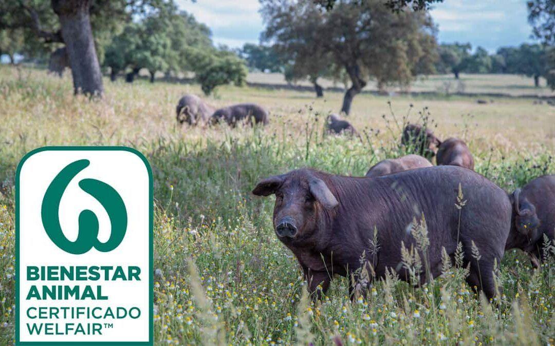 MIO1898 obtiene el sello de garantía Welfair en Bienestar animal